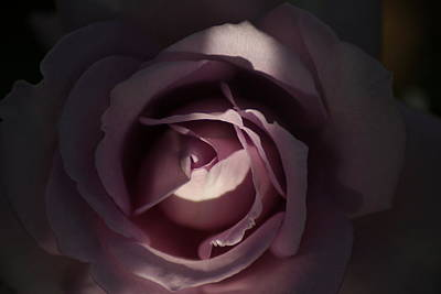 Photograph - A Rose By Any Name by Ron Read