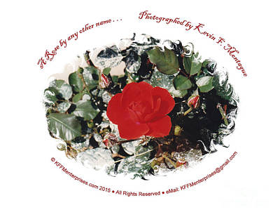 Photograph - A Rose By Any Other Name . . . by Kevin Montague