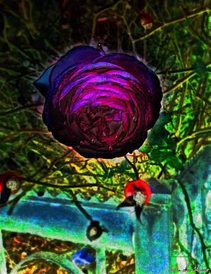 Photograph - A Rose By Any Other Name by Iowan Stone-Flowers
