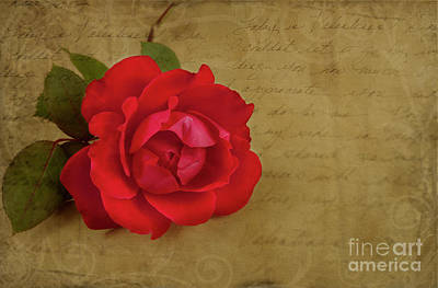 A Rose By Any Other Name Original by Lena Auxier
