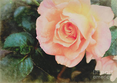 A Rose For Kathleen Art Print by Janice Rae Pariza