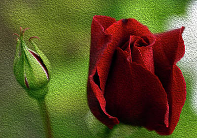 A Rose For Mother Art Print