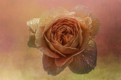 Floral Photograph - A Rose For Mother's Day by Peggy Blackwell