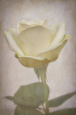 Painterly Photograph - A Rose For My Rose by Robert Brown