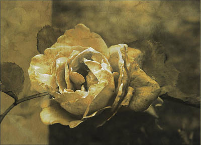 Digital Art - Vintage Effect Rose by Fine Art By Andrew David