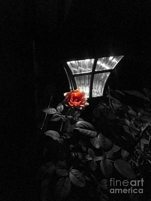 Photograph - A Rose In Any Other Light by Marie Neder