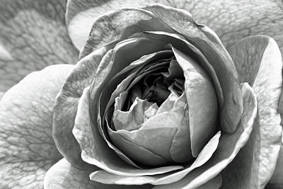 Black And White Photograph - A Rose In Monochrome by Alexander Mendoza