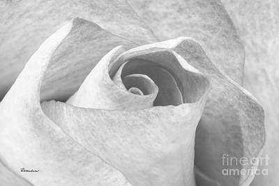 Photograph - A Rose Is A Rose Black And White Floral Photo 753  by Ricardos Creations