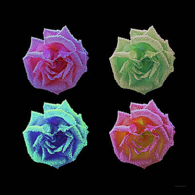 Photograph - A Rose Is A Rose... by Harold Zimmer