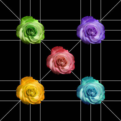 A Rose Is A Rose Is A Rose Print by Peter Piatt