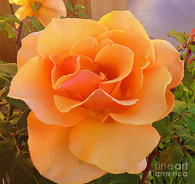 Photograph - A Rose Is A Rose by Joyce Creswell