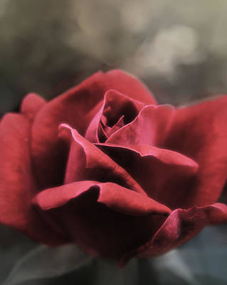 Photograph - A Rose Is A Rose by Karen Musick