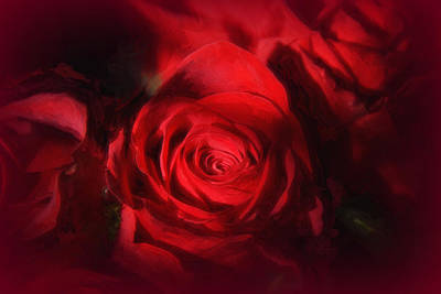 Photograph - A Rose Is A Rose by Tricia Marchlik