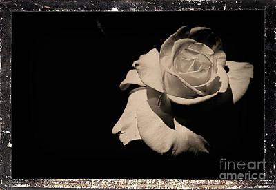 Photograph - A Rose Is But A Rose  by Scott D Van Osdol