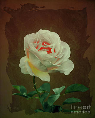 Digital Art - A Rose Is Still A Rose by Gabriele Pomykaj