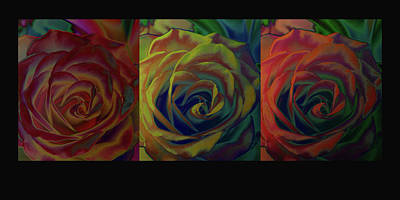 Photograph - A Rose Of A Different Color by David Pantuso