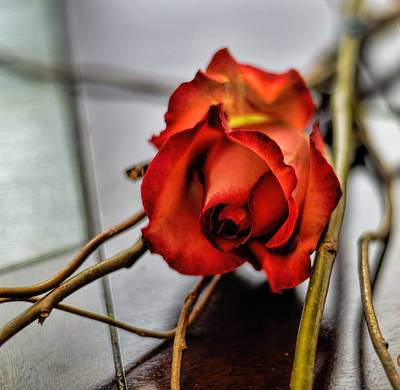 Art Print featuring the photograph A Rose On Bamboo by Diana Mary Sharpton