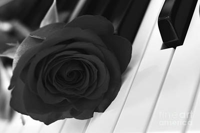 Photograph - A Rose On The Piano Keys by Olga Hamilton