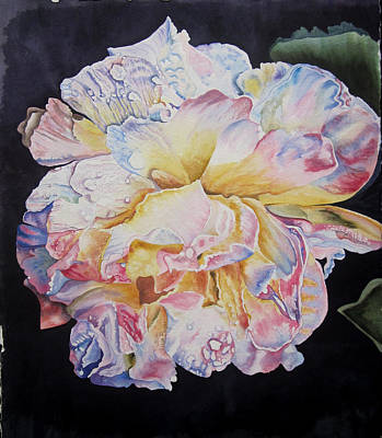 Painting - A Rose by Teresa Beyer