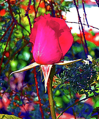 Digital Art - A Rose That Awakens by Joseph Coulombe
