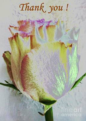 Photograph - A Rose To Thank You by Barbie Corbett-Newmin