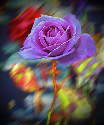 Photograph - A Rose by Vladimir Kholostykh
