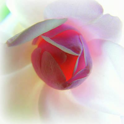 Photograph - A Rosy Glow by Susan Lafleur