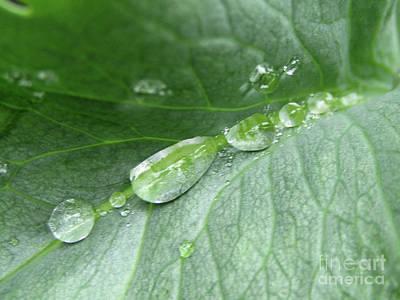 Photograph - A Row Of Drops by Kim Tran