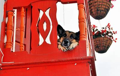 a sad dog in red balcony. Pets in Salento Original by HQ Photo