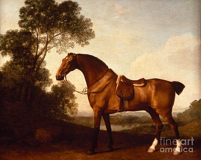 A Saddled Bay Hunter Art Print by Celestial Images
