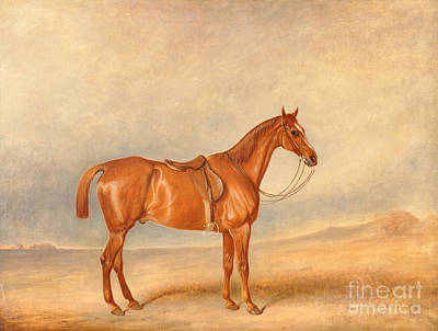 Chestnut Painting - A Saddled Chestnut Hunter by Celestial Images