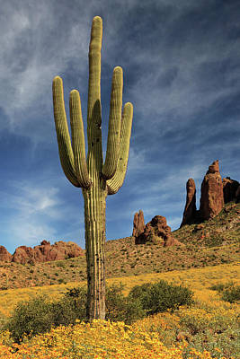 Photograph - A Saguaro In Spring by James Eddy