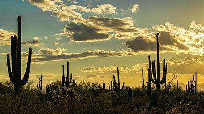 Photograph - A Saguaro Silhouette Sunset  by Saija Lehtonen