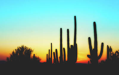Photograph - A Saguaro Sunset by Library Of Congress
