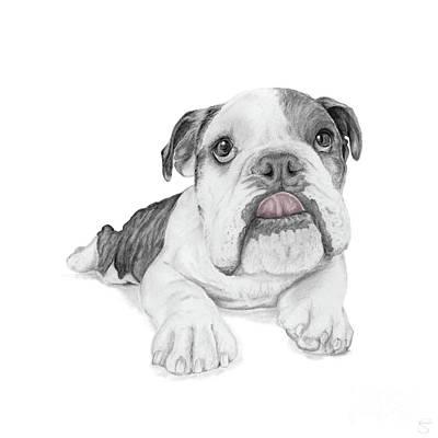 Brindle Drawing - A Sassy Bulldog Puppy by Stacey May