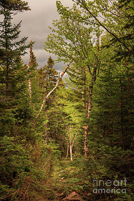 Photograph - A Scene From Baxter State Park by Elizabeth Dow