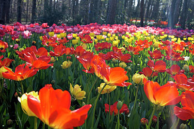 Photograph - A Sea Of Color by Cricket Hackmann