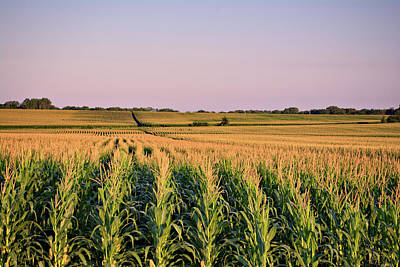 Photograph - A Sea Of Corn by Bonfire Photography