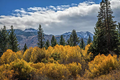 Photograph - A Sea Of Golden Aspens by Lynn Bauer