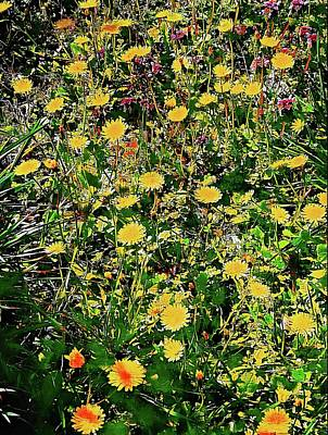 Photograph - A Sea Of Yellow Blooms by Dorothy Berry-Lound