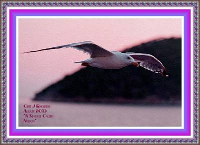 Wild And Wacky Portraits - A Seagull Called Nelson H A With Decorative Ornate Printed Frame. by Gert J Rheeders
