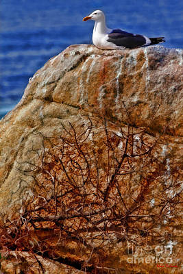 Photograph - A Seagulls Rock by Blake Richards