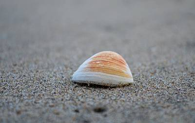 Photograph - A Seashell  by Alex King