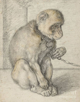 A Seated Monkey On A Chain Art Print