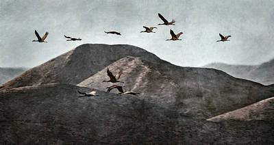 Photograph - A Sedge Of Cranes by Leda Robertson
