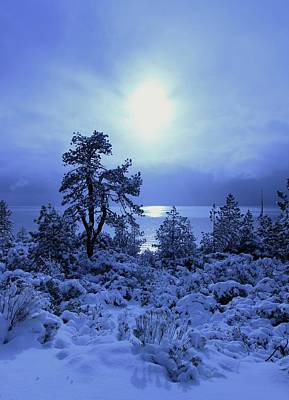 Photograph - A Shining Light In Winter by Sean Sarsfield