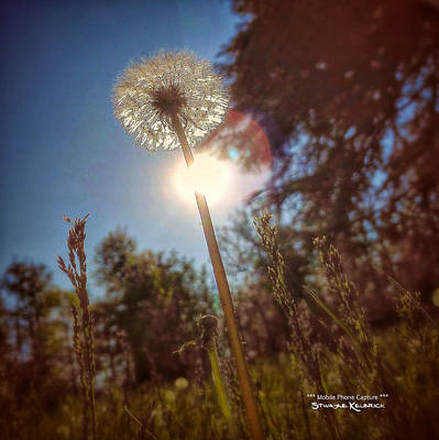 Photograph - A Shiny Flower Day by Stwayne Keubrick