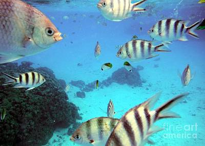 Photograph - A Shoal Of Fish by Barbie Corbett-Newmin