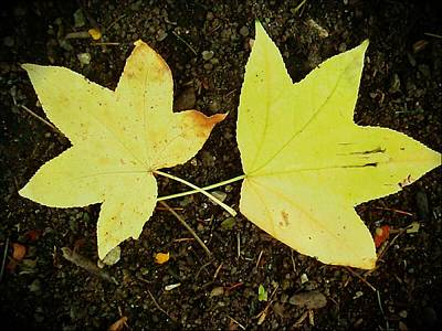 Photograph - A Sign Of Fall by Beth Akerman