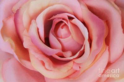 Photograph - A Silk Rose By Any Other Name by Jennifer E Doll